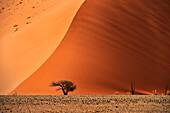 Dune 45, orange sand, near Sossusvlei, Namib Naukluft National Park, Namibia, Namib desert, Africa