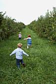 Three children running in apple orchard