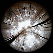 Fisheye view of autumn forest in mist