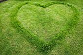 Heart shape in lawn