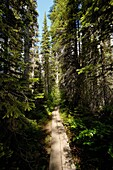 Walkway towards Emerald Lake, Rocky Mountains, British Colombia, Yoho National Park, Canada, North America.