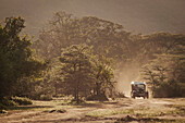 An old replica safari vehicle drives through Cottars Conservancy in Kenya