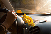 Young woman driving car with flower next to steering wheel