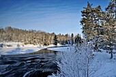 Open water of Wanapitei River with frosted trees in winter, Wanup, Ontario, Canada.