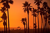 sillhouette of palm tree's and people in the distance enjoying a sunset at the beach