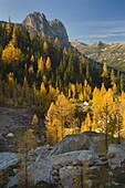 Early Winters Spires and Subalpine Larch (Larix lyallii) in autumn, North Cascades Washington.