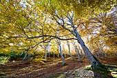 Moncayo Natural Park, Zaragoza, Aragon, Spain.