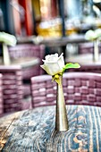 White Rose in a Stainless Steel Bud Vase Decorating a Table at an Ourdoor Urban Sidewalk Cafe.