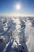 Mont Logan, Gaspesie National Park, Quebec