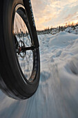 Low Angle Perspective View Of A Fatback Bicyle And Tire Trail Riding In Winter, Far North Bicentennial Park, Anchorage, Southcentral Alaska