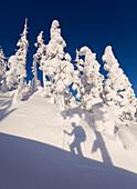 Shadow Of A Skier Climbing The Snow Covered North Wrangell Trail, Wrangell Island, Alaska