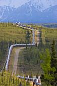 Trans Alaska Oil Pipeline Traverses Tundra In The Alaska Range, Interior, Alaska