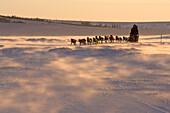 Jacques Philip Runs Downwind Towards Unalakleet In Ground Blizzard 2006 Iditarod Ak