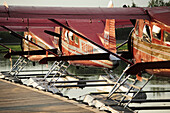 Group Of Rust's Flying Service Dehavilland Beaver Airplanes Docked On Lake Hood In Anchorage, Southcentral Alaska, Summer/N