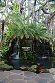 'Coy pond in the International Market Place; Honolulu, Oahu, Hawaii, United States of America'