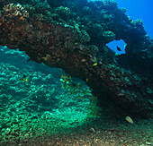 'Underwater of view of an arch formed from lava; Lanai Island, Maui County, Hawaii, United States of America'