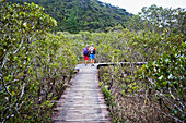 'A Spectacular Mangrove Forest Walk At The Paihia To Opua Walking Track At The Entrance To Piahia; New Zealand'