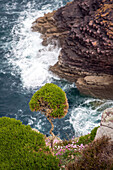 Cliffs and vegetation, pointe du cap-frehel, cotes-d'armor (22), france