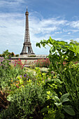 Vegetable garden, garden with view of the eiffel tower, roof terrace of the city of architecture and heritage, palais de chaillot, 16th arrondissement, paris (75), france