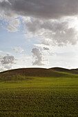 Green Fields and Rolling Hills Against Dramatic Sky, Washington, USA