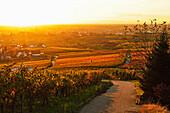 Vineyard landscape and Buehlertal village, Ortenau, Baden Wine Route, Baden-Wurttemberg, Germany, Europe