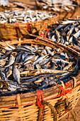Fish drying in baskets at Negombo fish market (Lellama fish market), Negombo, West Coast of Sri Lanka, Asia