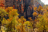 RED CANYON CLIFFS, ZION NATIONAL PARK, UTAH, USA