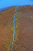 aerial view of a blue stream flowing into the sea shore brown algae. vertical image