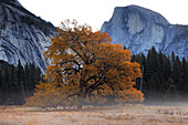 MISTY MORNING IN YOSEMITE VALLEY AND HALF DOME, YOSEMITE NATIONAL PARK, CALIFORNIA, USA