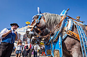 Germany, Bavaria, Munich, Oktoberfest, Horses Dressed in Festival Livery