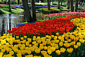 Netherlands, Lisse, Keukenhof garden, tulips