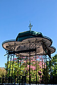 Portugal, Lisbon, Jardim da Estrela, Madragoa district, Chorisia speciosa blossoming