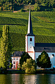 'Church on the water's edge and a vineyard in Mosel valley; Piesport, Rhineland-Palatinate, Germany'