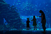 'Mother with boy and girl looking into the massive aquarium in the Dubai Mall; Dubai, United Arab Emirates'
