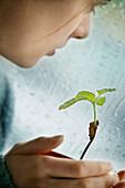 Nurturing A Plant