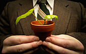 Businessman Holding A Bean Plant In A Pot