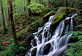 A Waterfall, Tremont Area, Great Smoky Mountains National Park, Tennessee, Usa