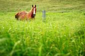 Horse In Tall Grass