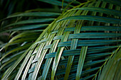 Palm Leaves Woven Together