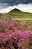 Wildflowers, North Yorkshire, England