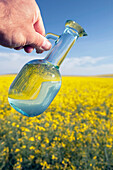 'Alberta, Canada; A Jar Of Canola Oil Being Poured Over A Flowering Canola Field'
