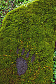 'Great Smoky Mountains National Park, United States Of America; Bear Footprint Carved Into A Moss Covered Rock Along A Trail'