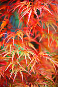 'Portland, Oregon, United States Of America; Leaves On A Tree In Autumn'