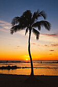 'Kauai, Hawaii, United States Of America; Cove With Palm Tree At Sunset And People On The Beach In The Distance'
