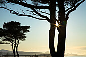'Parknasilla, County Kerry, Ireland; Silhouette Of Trees With The Sunlight Beaming Through The Branches'