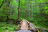 'Oregon, United States Of America; A Wooden Walkway In Columbia River Gorge National Scenic Area'