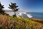 'Oregon, United States Of America; Summer Flowers Along Yaquina Head On The Oregon Coast'