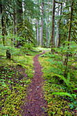 'A Trail Going Through Mount Hood National Forest; Oregon, Usa'
