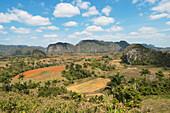 'Vinales Valley In Sierra De Los Organos; Vinales, Cuba'