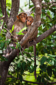 'Two Monkeys In A Tree; Tamil Nadu, India'